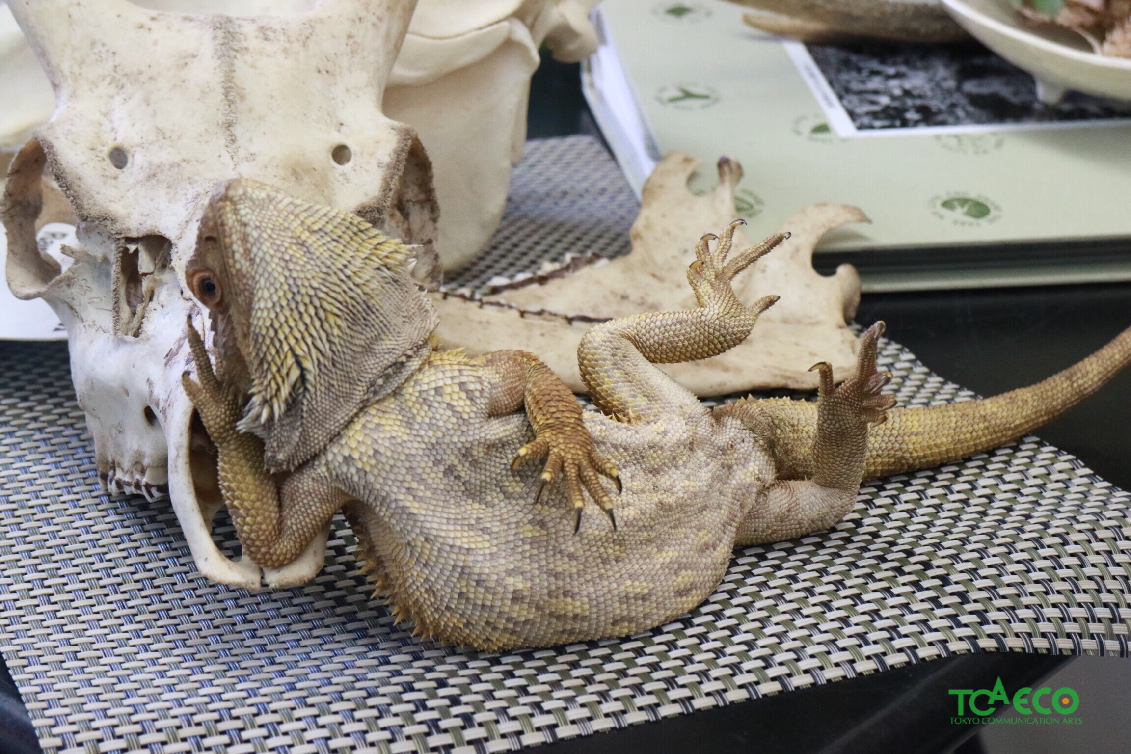 ECOブログ大爬虫類展を開催しました。