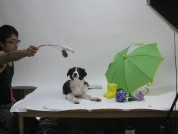 Dog_3