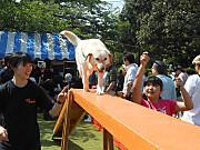 Dog_6