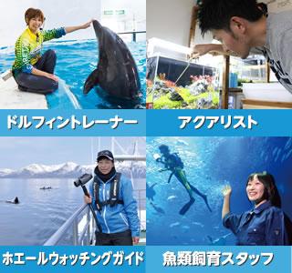 水中の生き物を相手にした仕事がしたい